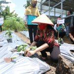 Mendorong Masyarakat Kembangkan Kebun Sayuran dan Tanaman Obat