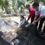 Bupati Landak Panen Perdana Ikan Nila di Dusun Pampang