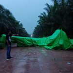 Pesawat THRAS PK-ELB Jatuh diperkebunan Sinar Mas