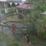 Cuaca Ekstrim Tumbangkan Pohon dan Gerobak Pedagang