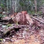 Hutan Tibatu dikukuhkan Sebagai Hutan Adat