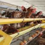 APFA Dirikan Research Farm Terbaik di Asia