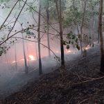 527,8 Hektare Lahan Terbakar di Melawi