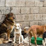 World Day Rabies 2019, Pemkab Landak Gelar Vaksin Massal