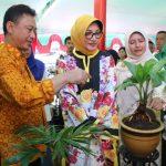 Tanaman Hias Jadi Peluang Bisnis Menarik di Kota Pontianak