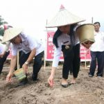 Pemkab Landak Dorong Petani Jagung Kembangkan Areal Replanting Sawit