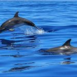 Atraksi Lumba-lumba Resmi Terlarang di Indonesia