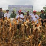 Prospek Pengembangan Jagung dan Padi Organik di Kabupaten Sanggau