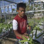 Ahli Pertanian: Bercocok Tanam Jadi Solusi Penghasilan di Tengah Pandemi