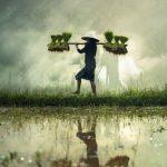 Demi Bayar Utang Rp 654 Perak, Petani Jalan Kaki Sejauh 15 Km ke Bank