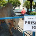 Jokowi Tebar Sapi Kurban ke 34 Provinsi