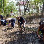 Pokdarwis Sungai Kupah Tanam Mangrove Digital