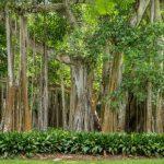 7 Agustus Sebagai Hari Hutan Indonesia, Ini Fakta Penting Tentang Hutan!