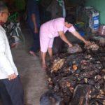 Mengintip Sukses Petani Karet dari Desa Bintang Mas