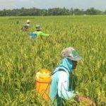 BPS: Nilai Ekspor Pertanian Januari 2021 Naik 13,91 Persen