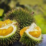 Hanya 50 Menit, Durian Senilai Rp 216 Miliar Ludes Terjual