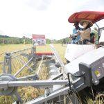 Pemkab Landak Dorong Gapoktan Kembangkan Pertanian Menuju Pertanian Modern