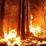 Kebakaran Hutan di Yunani Picu Ribuan Burung Migrasi Tersesat hingga Mati