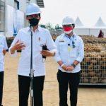 Presiden Jokowi Instruksikan Mentan Seriusi Porang Sebagai Komoditas Andalan Ekspor