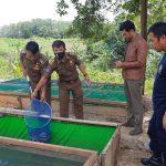 Dukung Program Ketahanan Pangan Dimasa Pandemi Melalui Budidaya Ikan