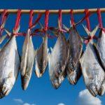 Kenapa Merkuri Bisa Ada di Ikan? Ini Penjelasannya