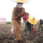 Bupati Landak Pacu Petani Jagung Tingkatkan Hasil Produksi