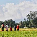 Antisipasi Gagal Panen, Kementan Ajak Petani OKU Timur Manfaatkan Asuransi