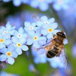 Ini Pertolongan Pertama Tersengat Lebah