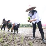 Bupati Landak Tanam Padi di Kecamatan Sebangki