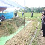 Karolin Apresiasi Produktivitas Petani Desa Re'es Dalam Setahun 3 Kali Panen