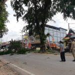 Antisipasi Ganggu Jaringan Listrik, Pemkab Bantu PLN  Pangkas Pohon