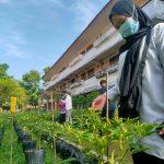 Suburnya Tanaman Organik Untan Village, Manfaatkan Sampah Organik Rumah Tangga