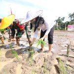 Tanam Perdana Inpari 42 Di Kecamatan Air Besar