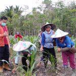 Menguatkan Ketahanan Pangan Petani di Bumi Intan