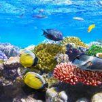 Australia Bersiap Bangun Taman Laut Seluas Pulau Kalimantan