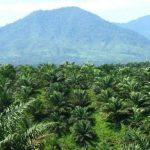 Ada Kampanye Anti Kelapa Sawit Indonesia di Swiss, Apa Jawaban Kemendag?