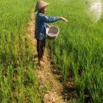 Distribusi Pupuk Subsidi Terhambat, Biang Keroknya Dinas Pertanian Daerah